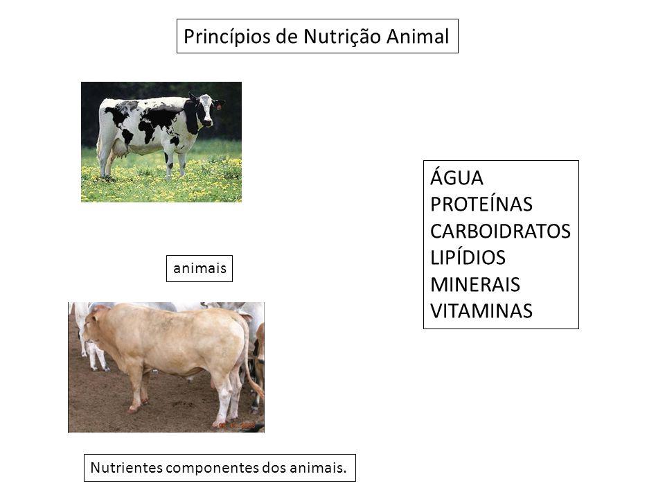 Princípios de Nutrição Animal