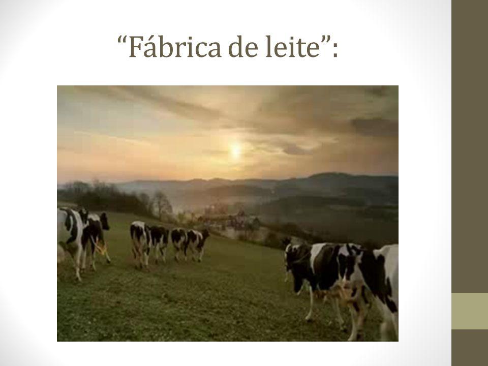Fábrica de leite :