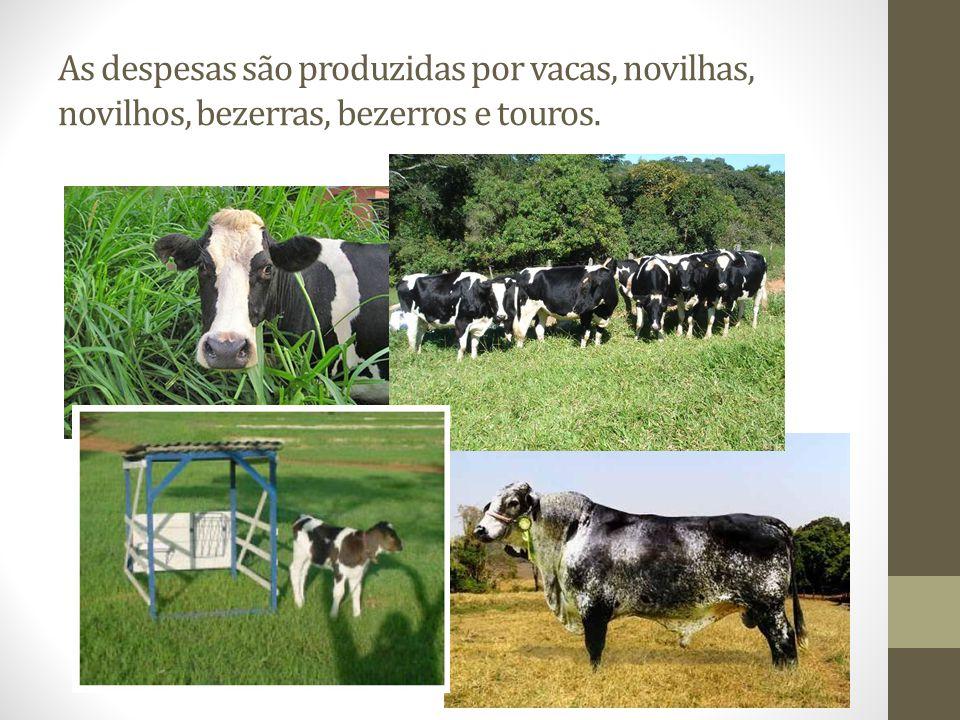 As despesas são produzidas por vacas, novilhas, novilhos, bezerras, bezerros e touros.