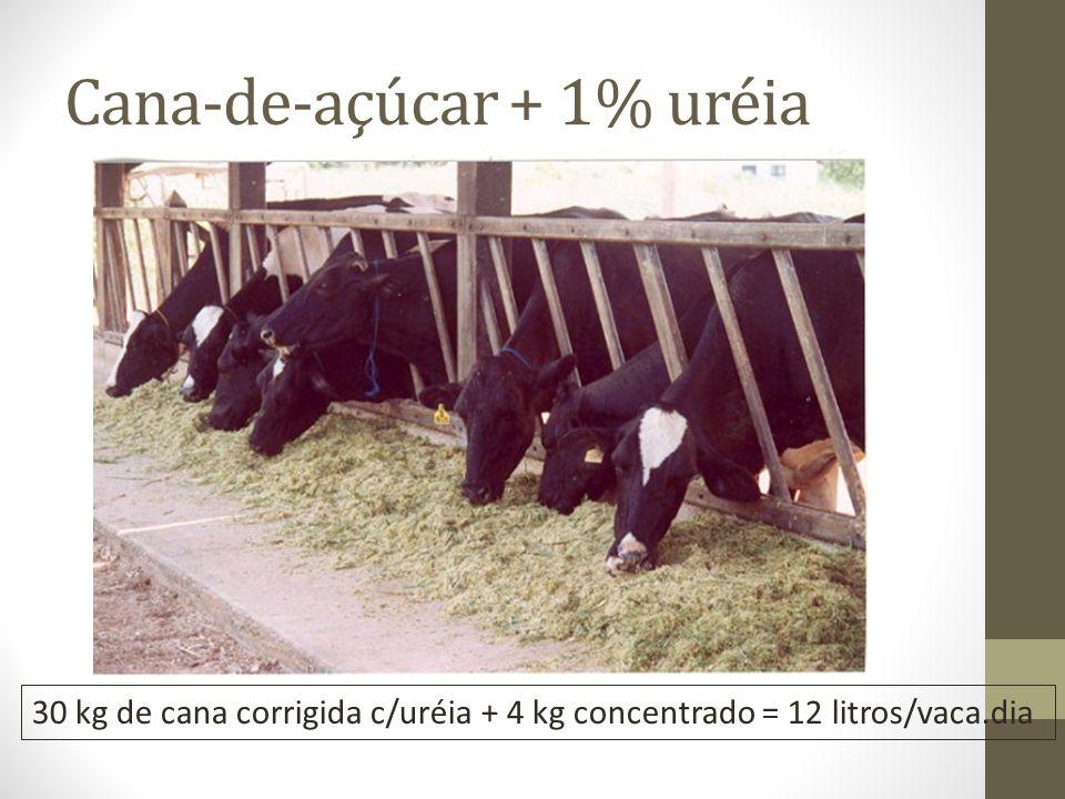 Cana-de-açúcar + 1% uréia