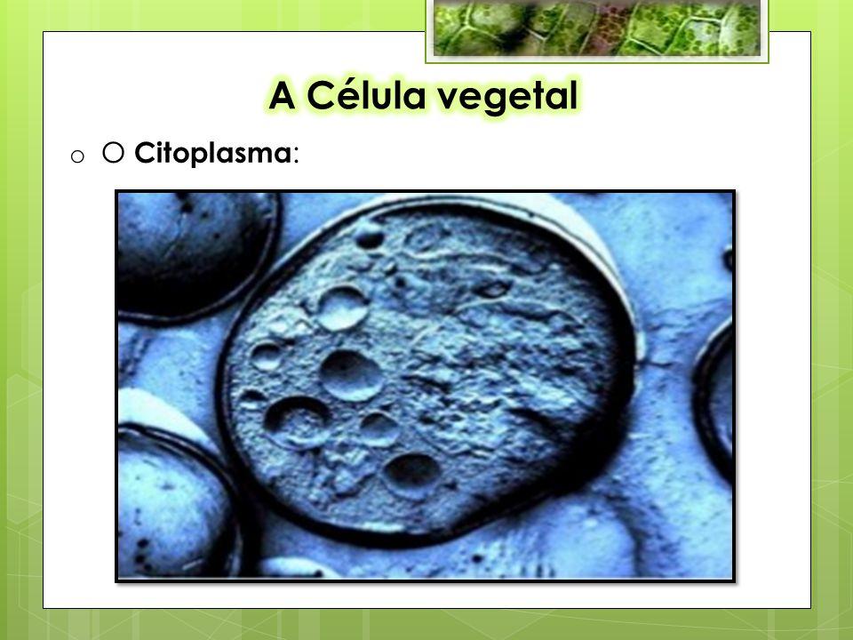 A Célula vegetal O Citoplasma: