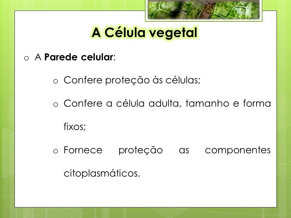 A Célula vegetal A Parede celular: Confere proteção às células;