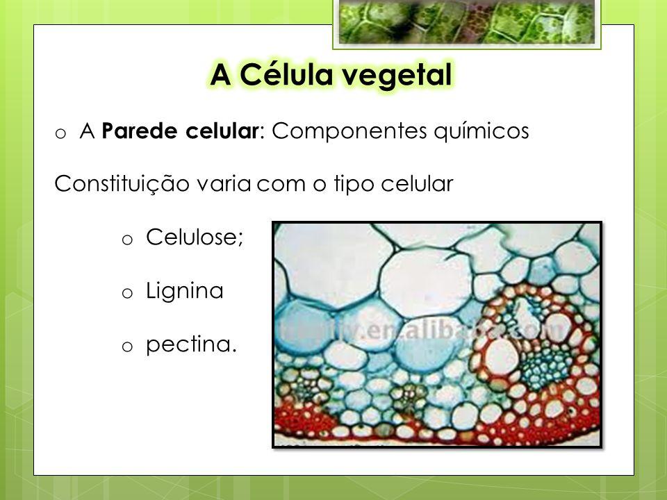 A Célula vegetal A Parede celular: Componentes químicos