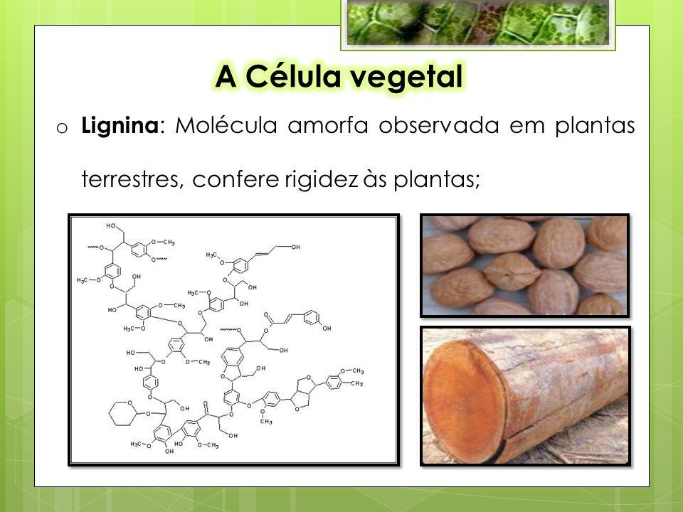 A Célula vegetal Lignina: Molécula amorfa observada em plantas terrestres, confere rigidez às plantas;