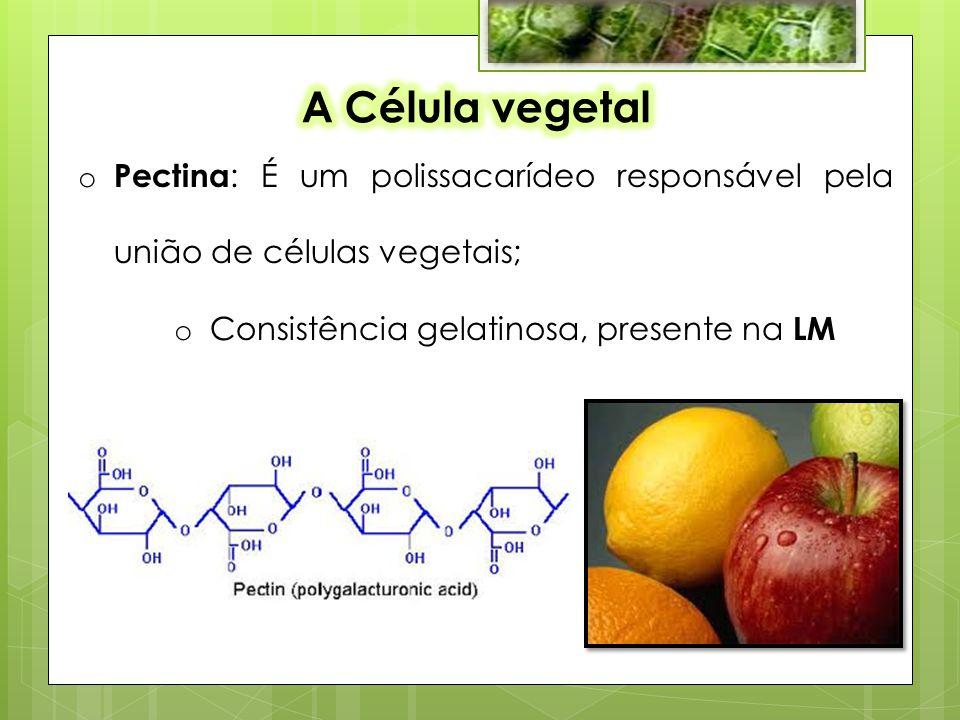 A Célula vegetal Pectina: É um polissacarídeo responsável pela união de células vegetais; Consistência gelatinosa, presente na LM.