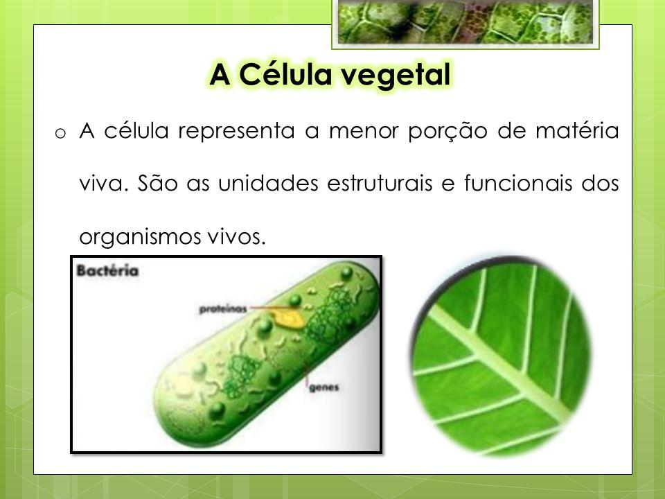 A Célula vegetal A célula representa a menor porção de matéria viva.