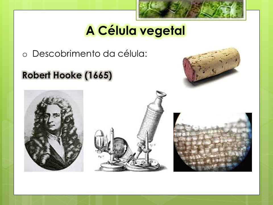 A Célula vegetal Descobrimento da célula: Robert Hooke (1665)