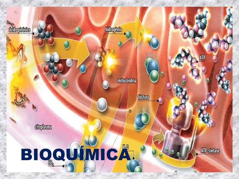 O que estuda bioquimica