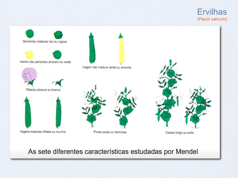 Ervilhas (Pisum sativum)