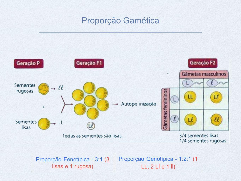 Proporção Gamética Proporção Fenotípica - 3:1 (3 lisas e 1 rugosa)
