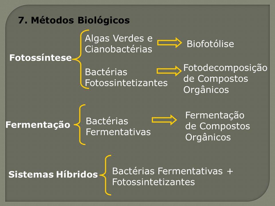 Algas Verdes e Cianobactérias Biofotólise