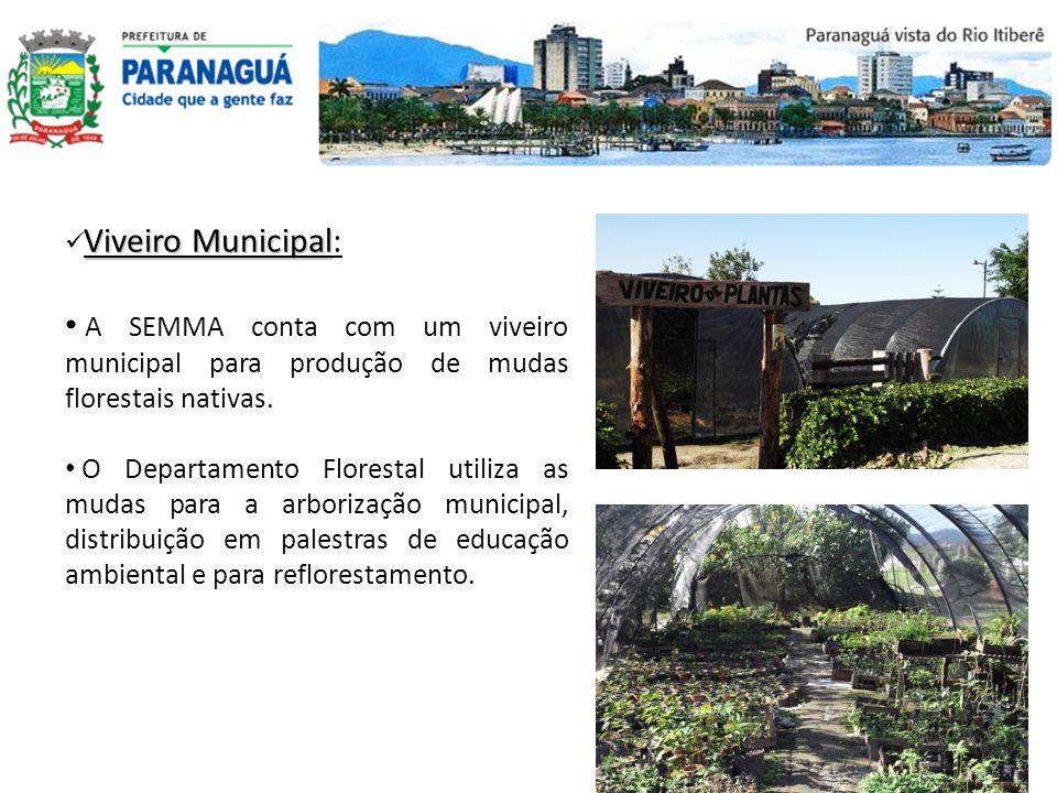 Viveiro Municipal: A SEMMA conta com um viveiro municipal para produção de mudas florestais nativas.
