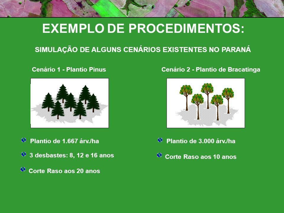 Cenário 1 - Plantio Pinus