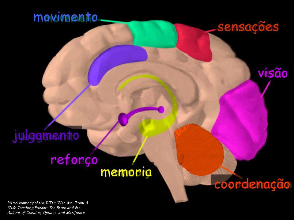 movimento sensações visão julgamento reforço memoria coordenação