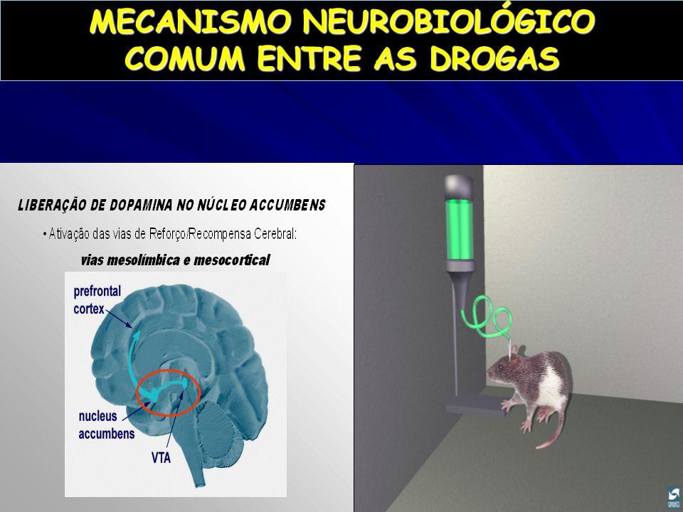 MECANISMO NEUROBIOLÓGICO