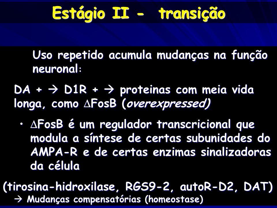 Estágio II - transição Uso repetido acumula mudanças na função neuronal: DA +  D1R +  proteinas com meia vida longa, como FosB (overexpressed)