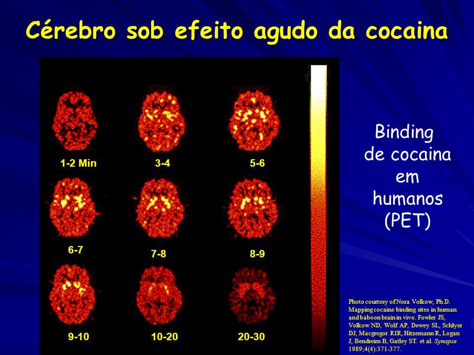 Cérebro sob efeito agudo da cocaina