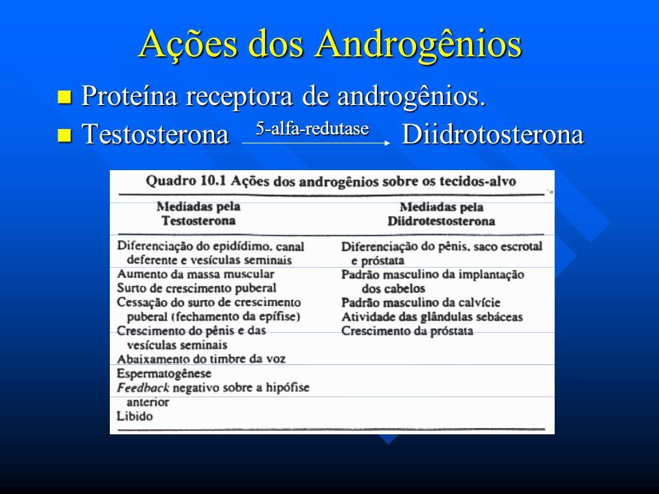 Ações dos Androgênios Proteína receptora de androgênios.