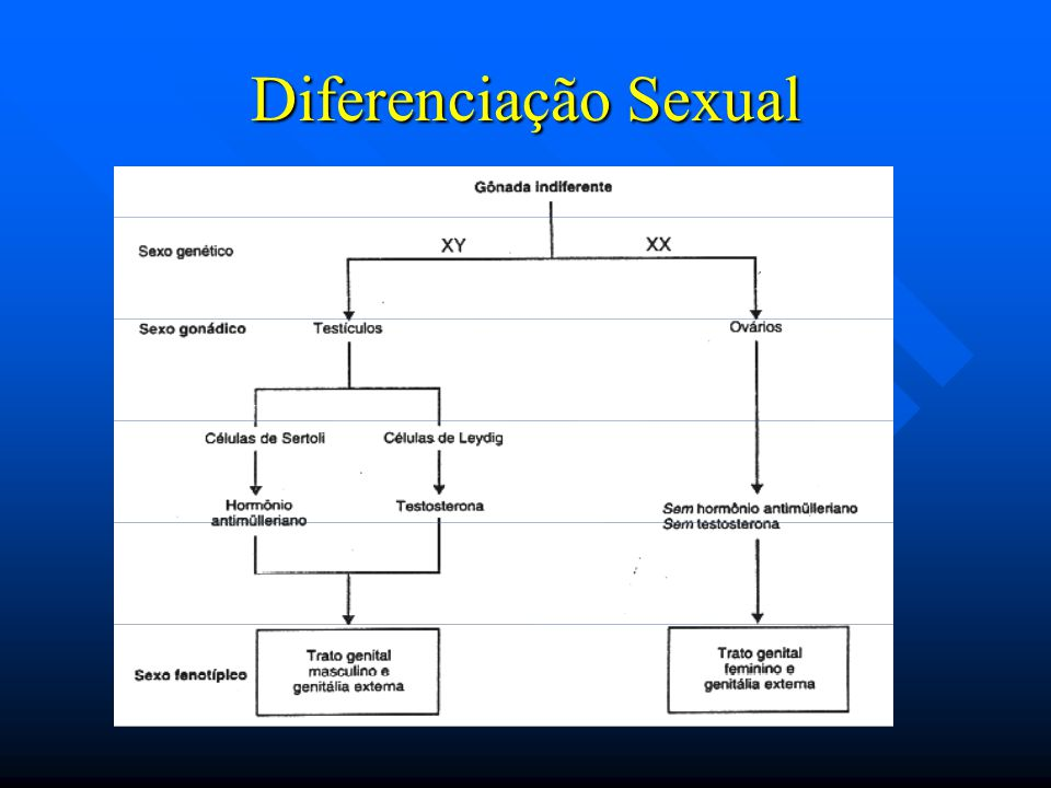 Diferenciação Sexual