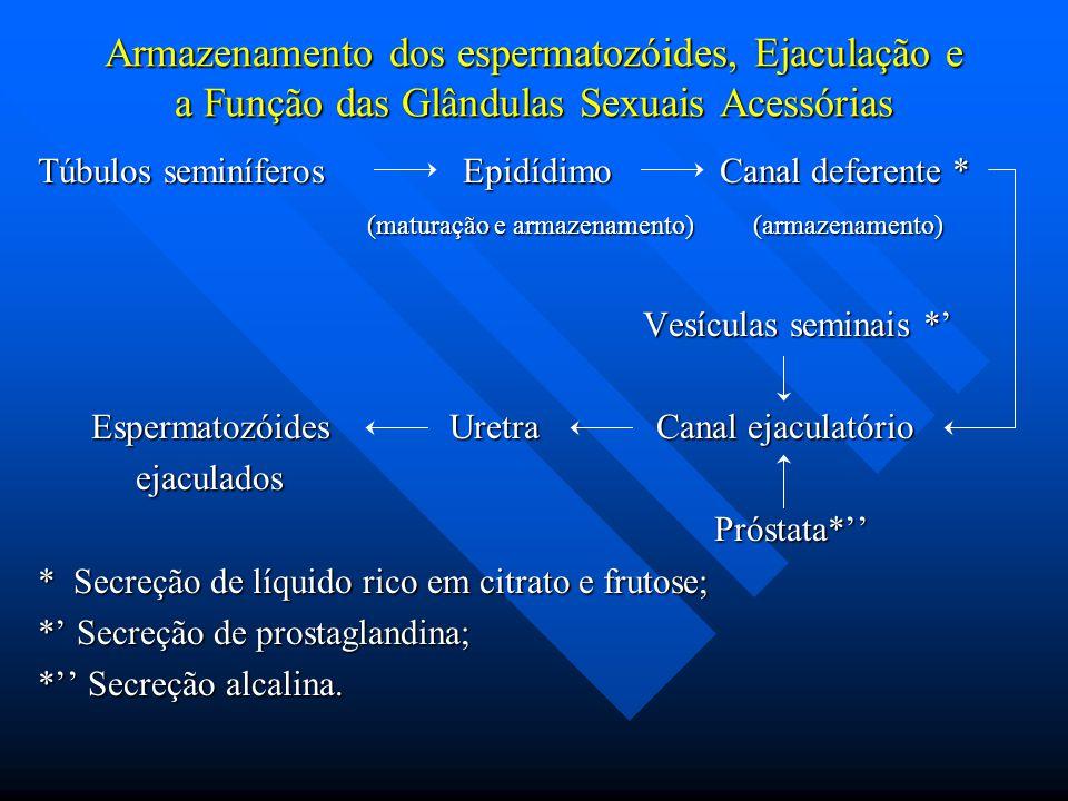 Armazenamento dos espermatozóides, Ejaculação e a Função das Glândulas Sexuais Acessórias