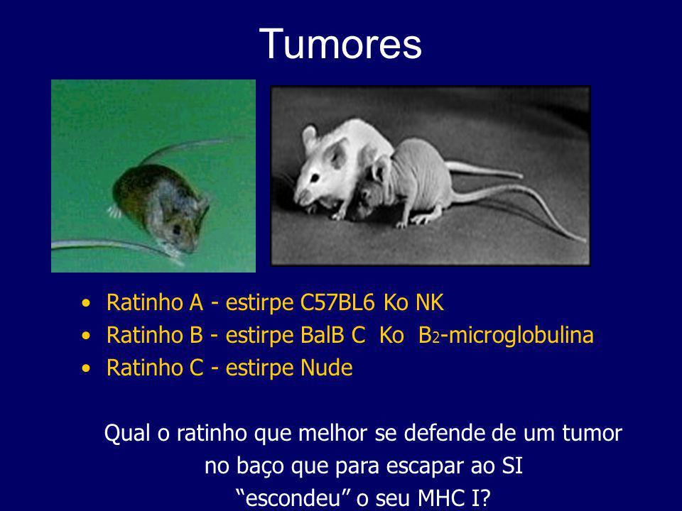 Tumores Ratinho A - estirpe C57BL6 Ko NK