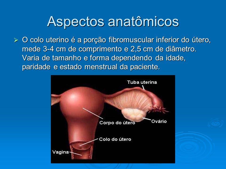 Aspectos anatômicos