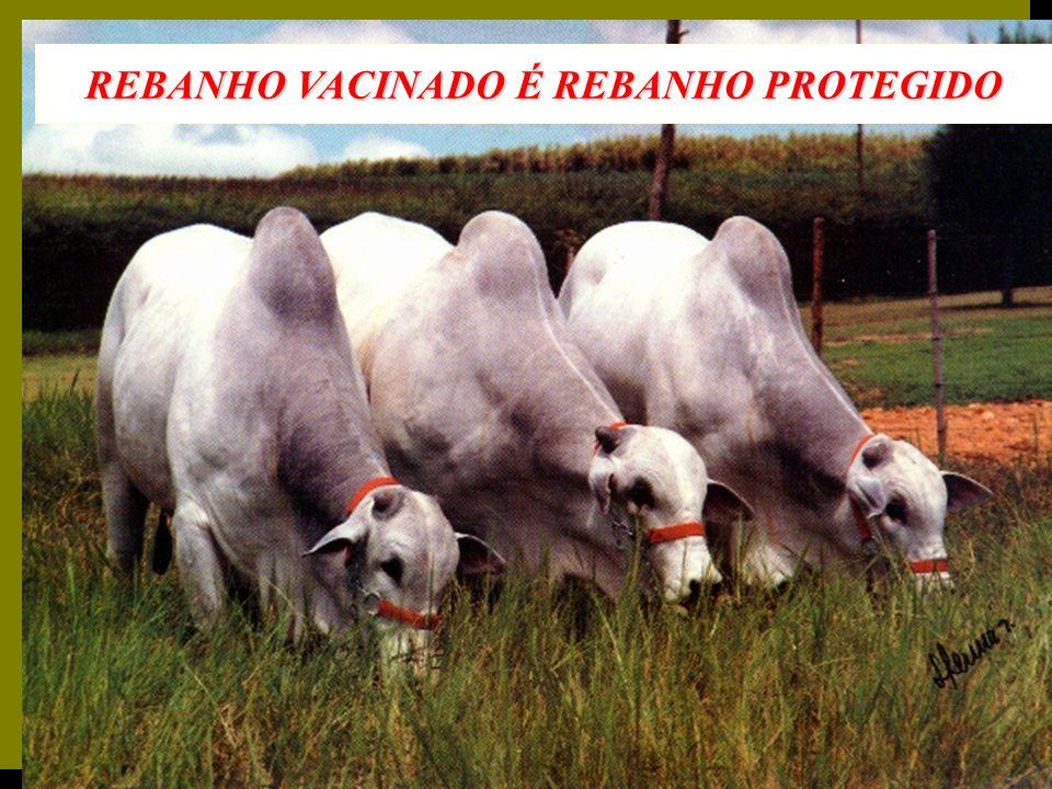 REBANHO VACINADO É REBANHO PROTEGIDO