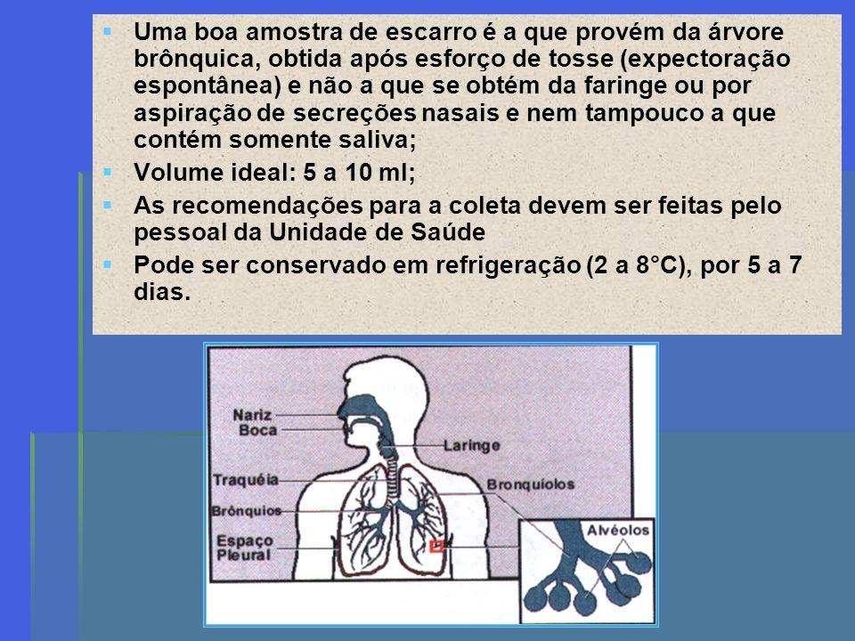 Uma boa amostra de escarro é a que provém da árvore brônquica, obtida após esforço de tosse (expectoração espontânea) e não a que se obtém da faringe ou por aspiração de secreções nasais e nem tampouco a que contém somente saliva;