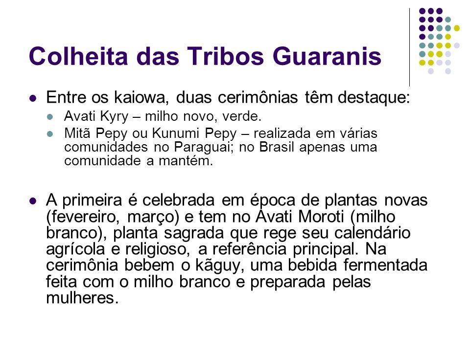 Colheita das Tribos Guaranis