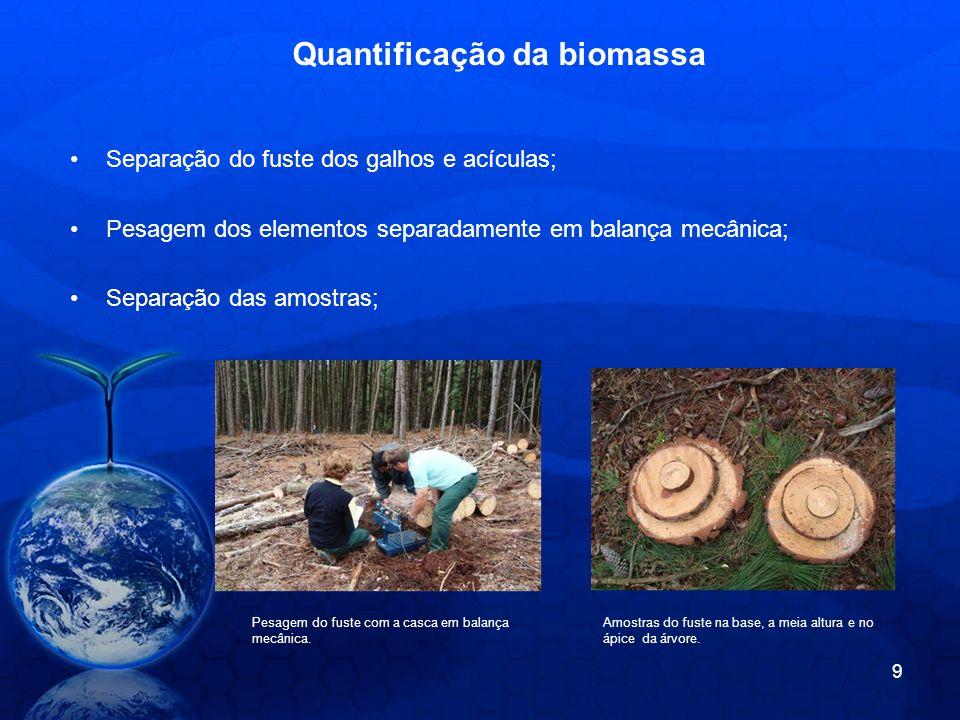 Quantificação da biomassa