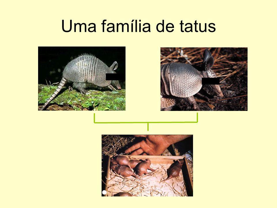 Uma família de tatus