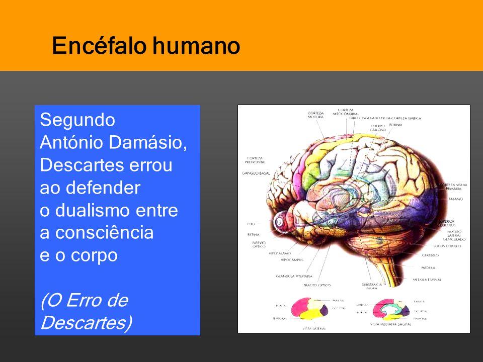 Encéfalo humano Segundo António Damásio, Descartes errou