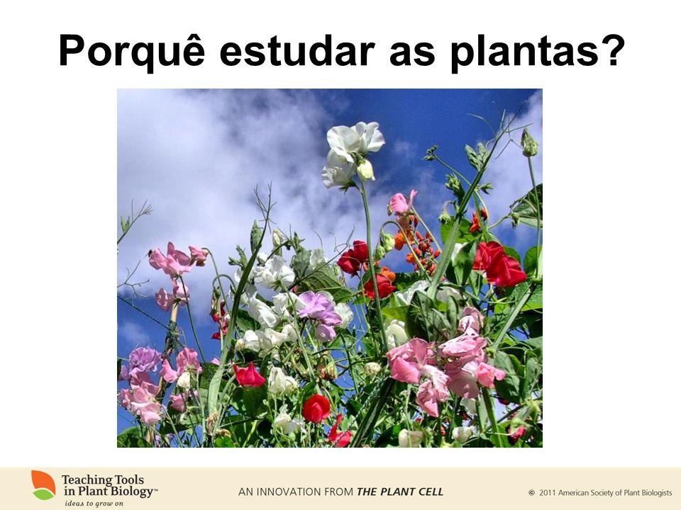 Porquê estudar as plantas