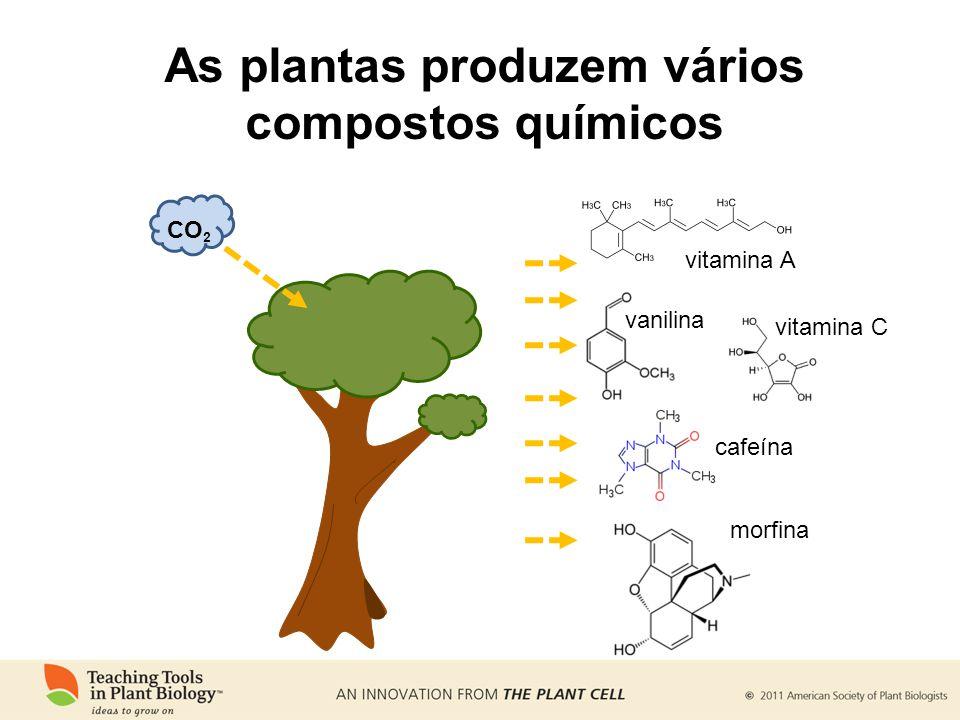 As plantas produzem vários compostos químicos