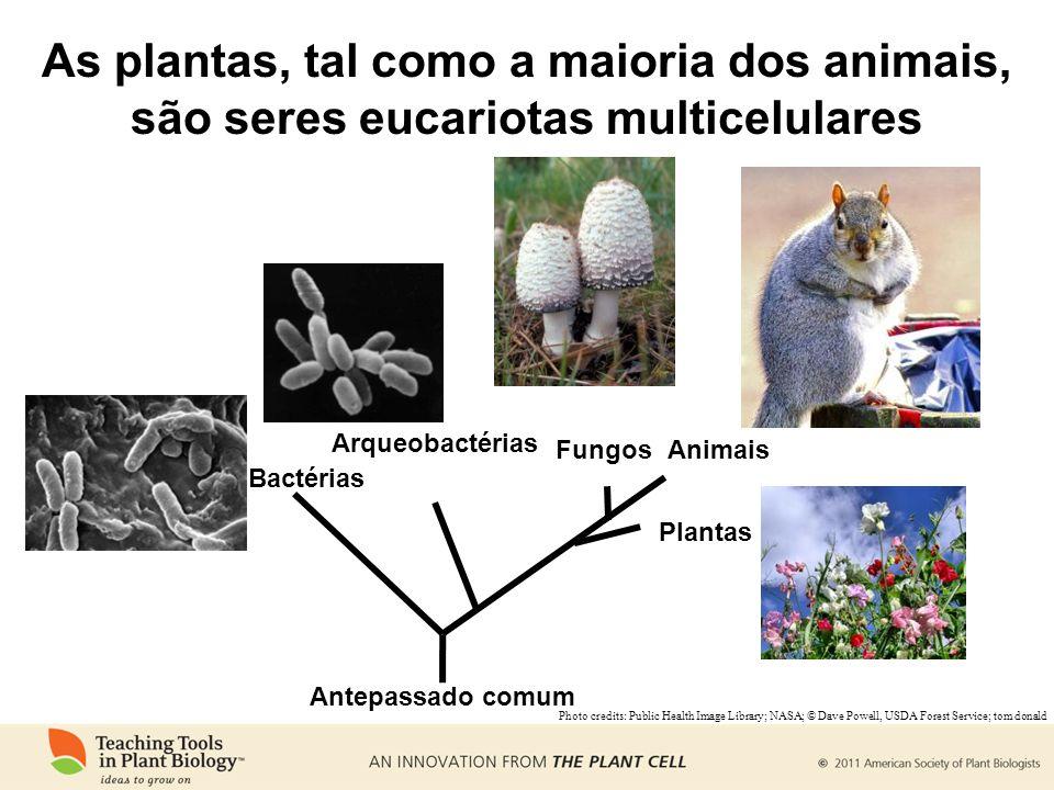 As plantas, tal como a maioria dos animais, são seres eucariotas multicelulares