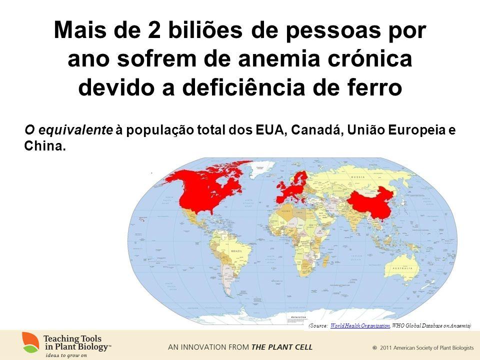 Mais de 2 biliões de pessoas por ano sofrem de anemia crónica devido a deficiência de ferro