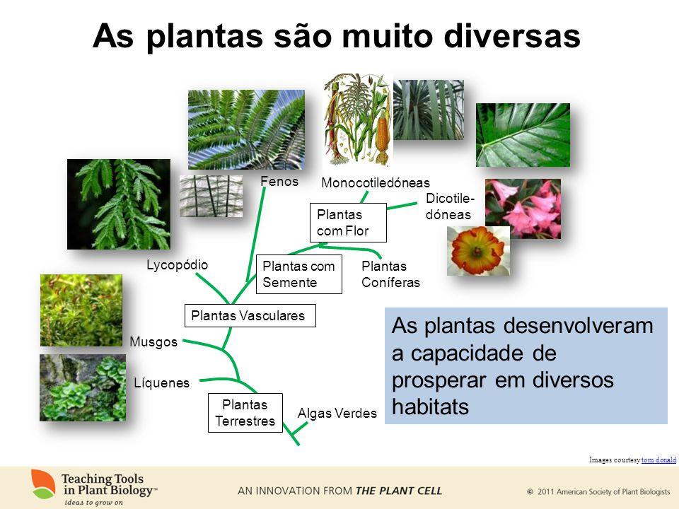 As plantas são muito diversas