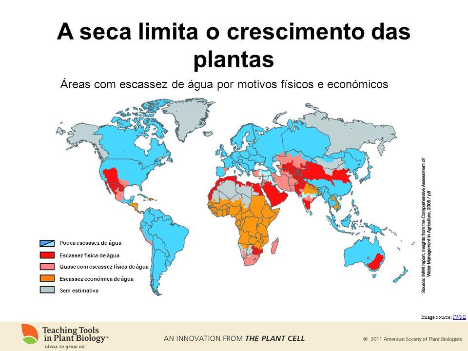 A seca limita o crescimento das plantas