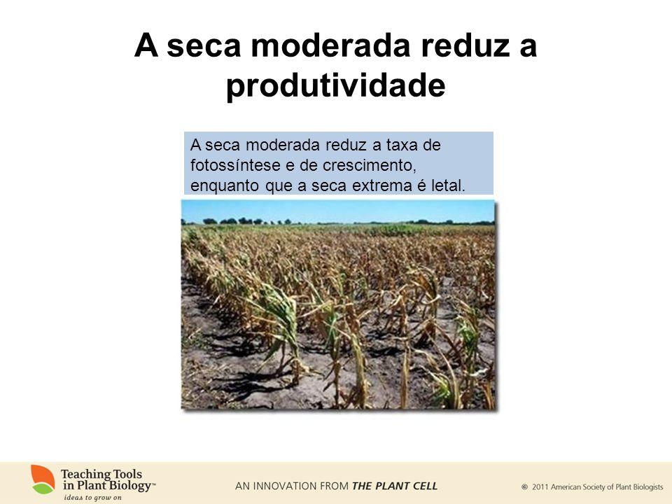 A seca moderada reduz a produtividade