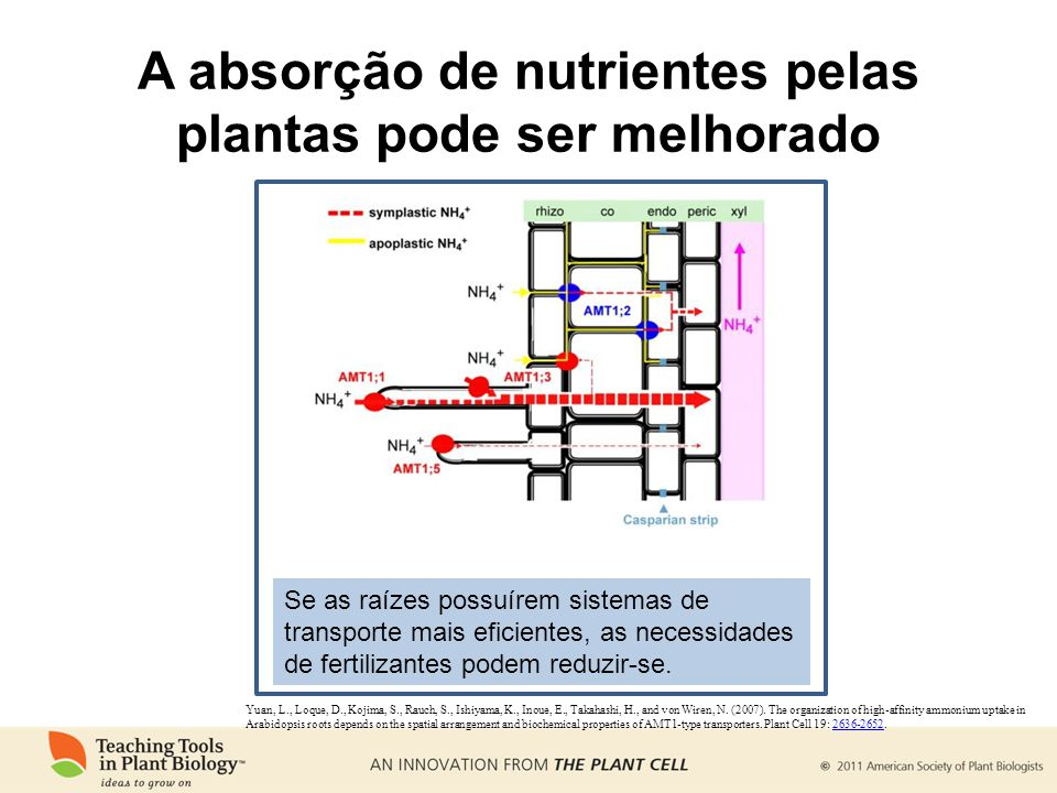 A absorção de nutrientes pelas plantas pode ser melhorado