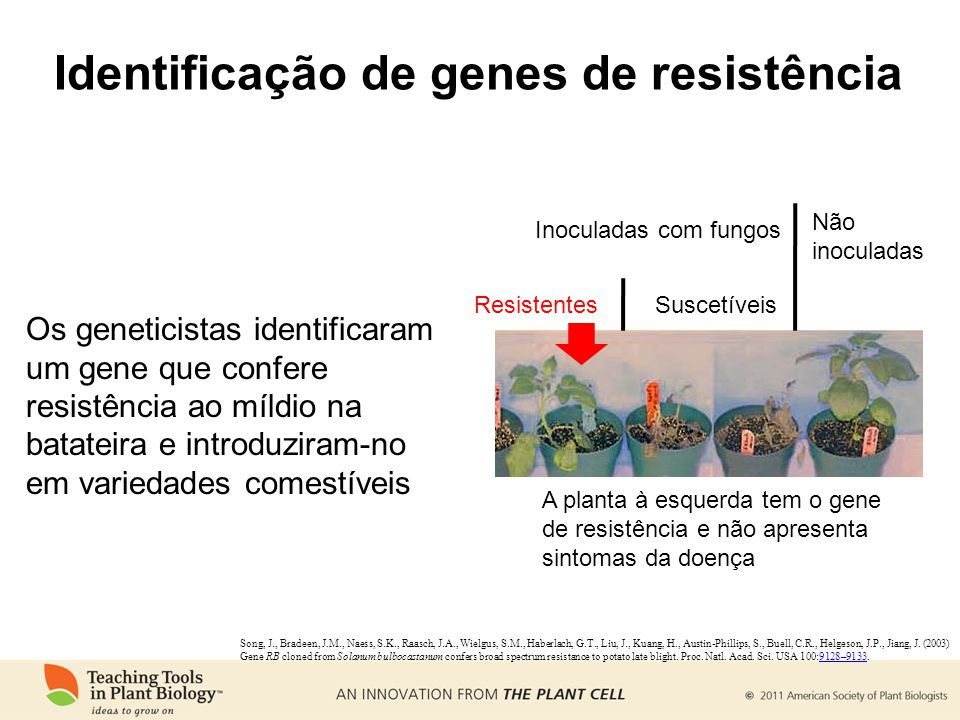 Identificação de genes de resistência