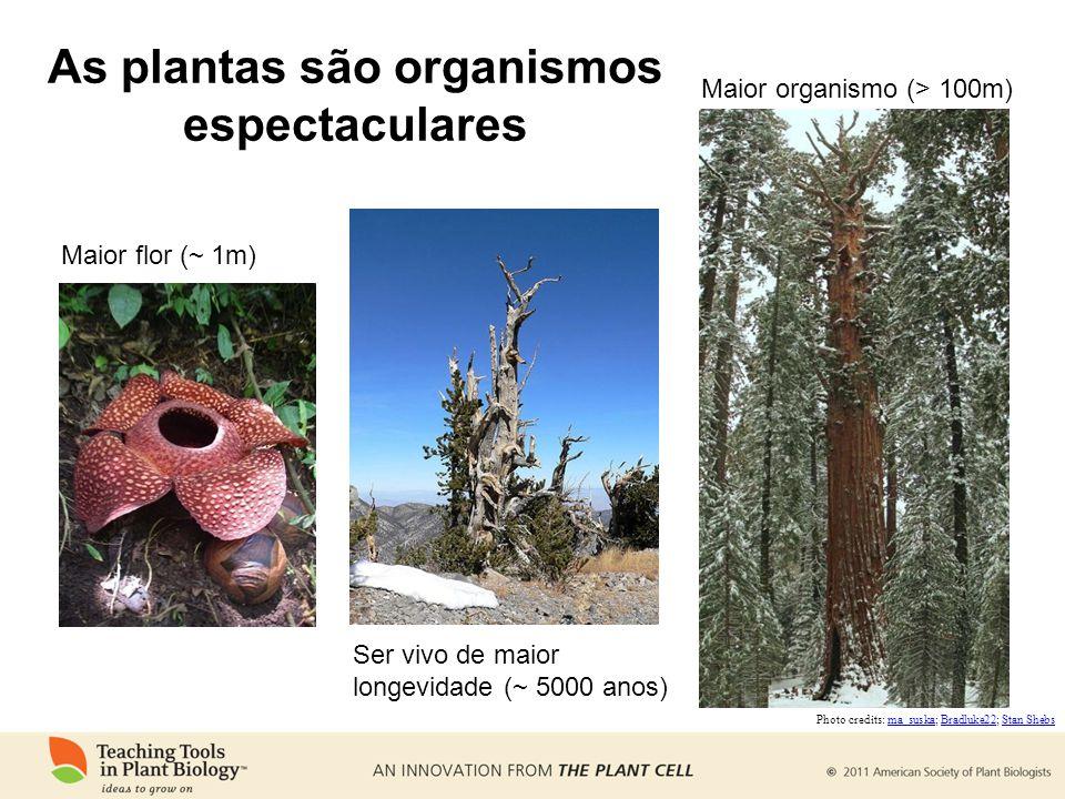As plantas são organismos espectaculares