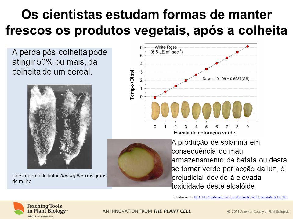 Os cientistas estudam formas de manter frescos os produtos vegetais, após a colheita