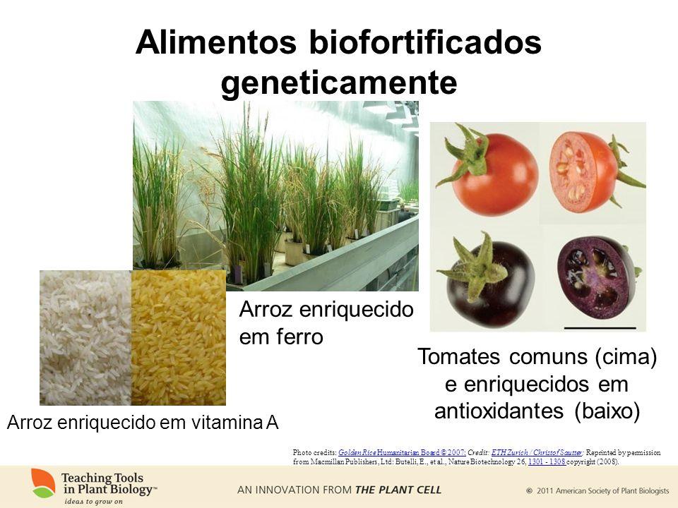 Alimentos biofortificados geneticamente