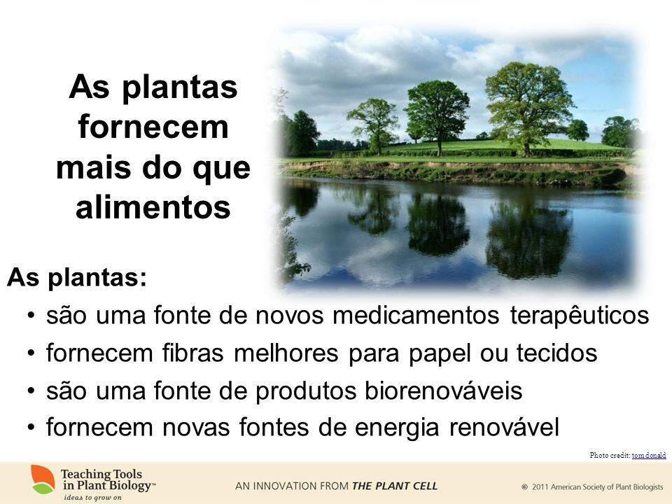 As plantas fornecem mais do que alimentos