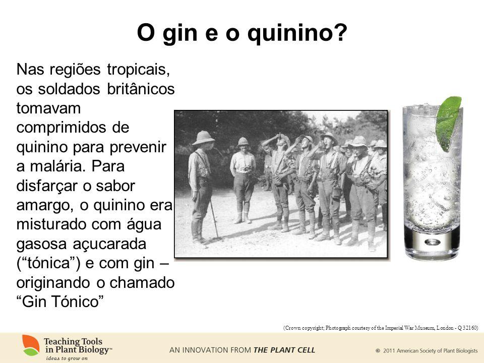 O gin e o quinino