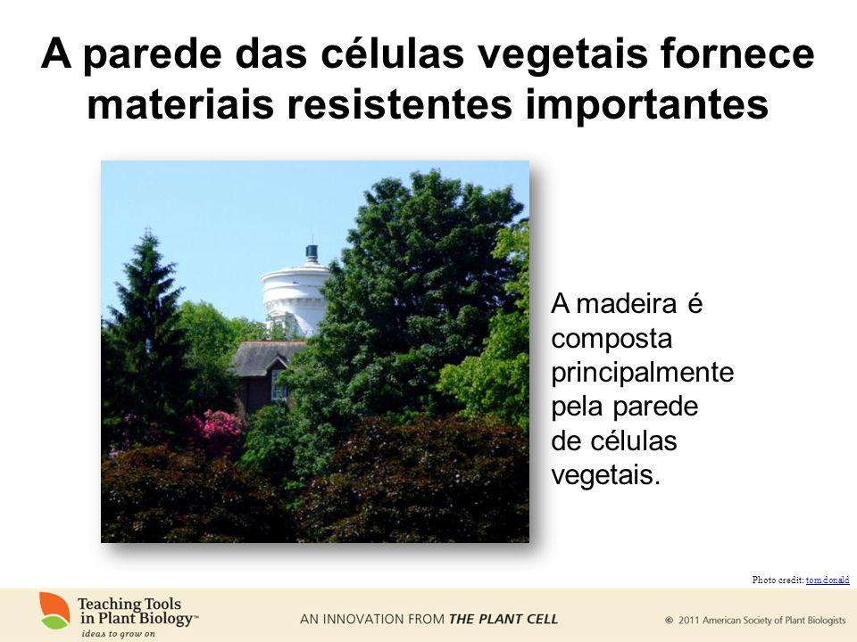 A parede das células vegetais fornece materiais resistentes importantes
