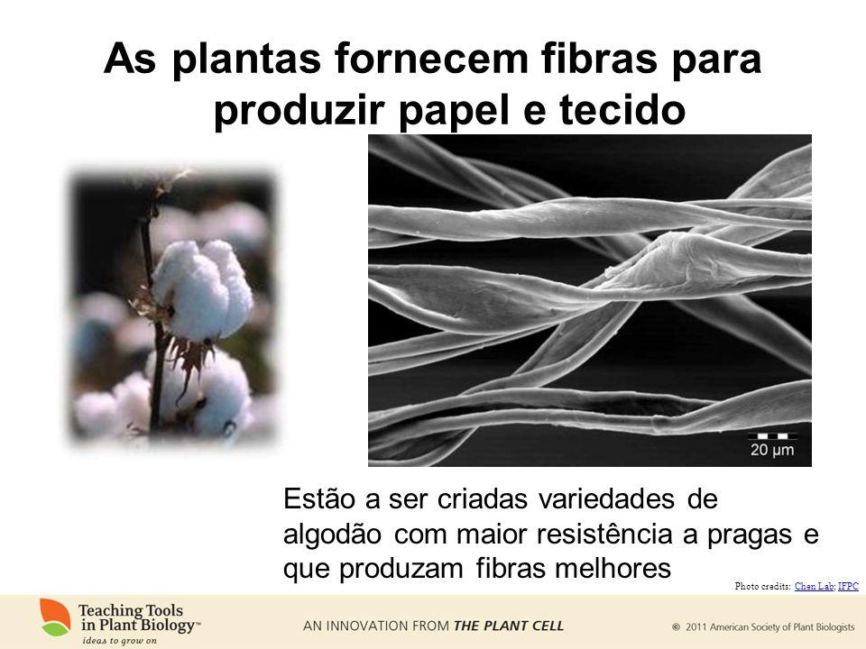As plantas fornecem fibras para produzir papel e tecido