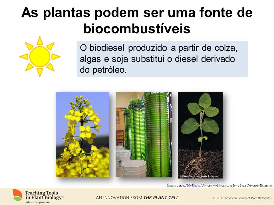 As plantas podem ser uma fonte de biocombustíveis