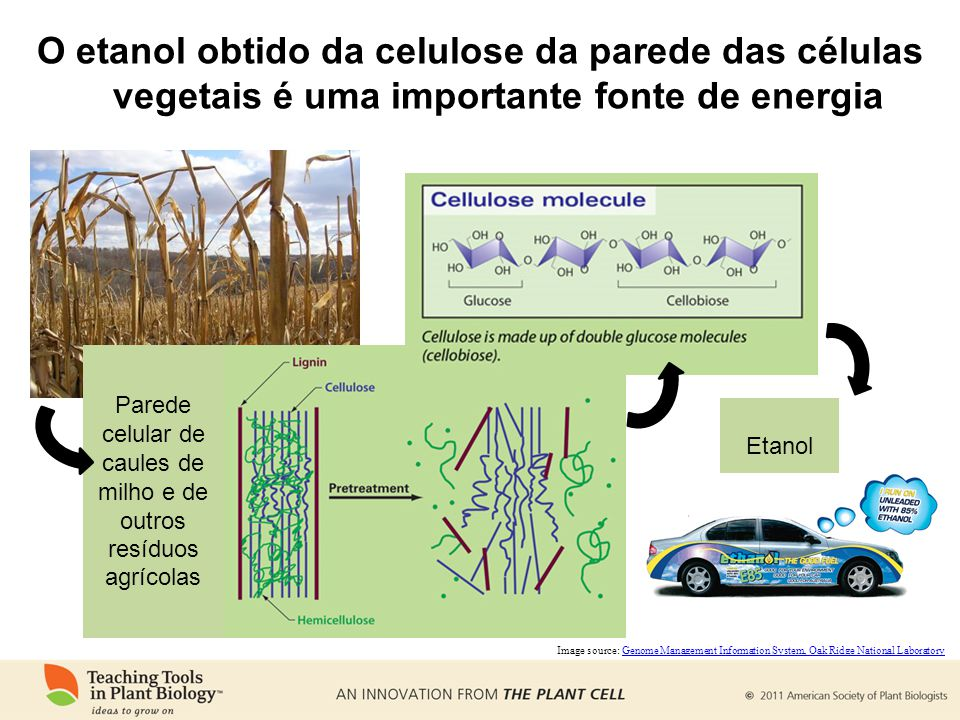 Parede celular de caules de milho e de outros resíduos agrícolas
